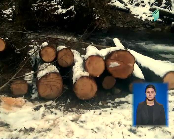 სამართალდამცველებმა აჭარაში ხე-ტყის უკანონო მოპოვების ფაქტი გამოავლინეს