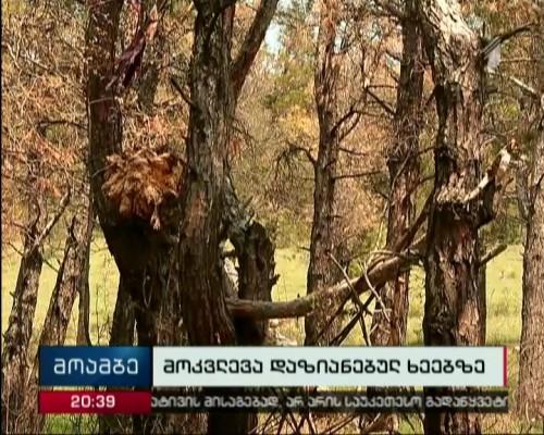 What served as reason of trees' damage at Lisi Lake?