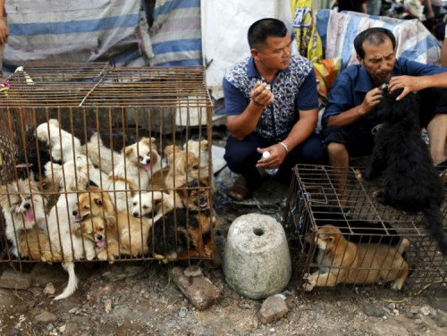 ტაივანში ძაღლებისა და კატების ხორცის ჭამა იკრძალება