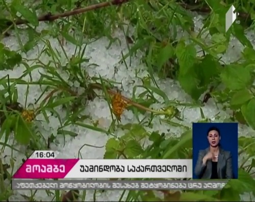 Hailstorm damages vegetable plants in Gori district