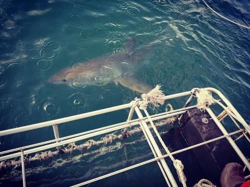 """23-გზის ოლიმპიური ჩემპიონი ცურვაში ზვიგენს შეეჯიბრება - """"ოცნების ასრულების შესაძლებლობა მომეცა"""""""
