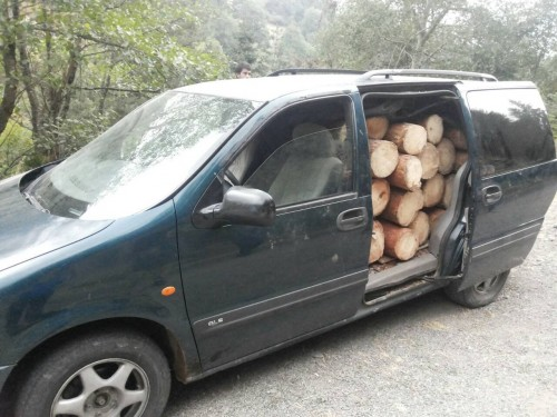 35 facts of illegal cut-down and transportation of trees revealed