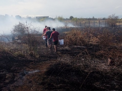 Fire in localized in Telavi