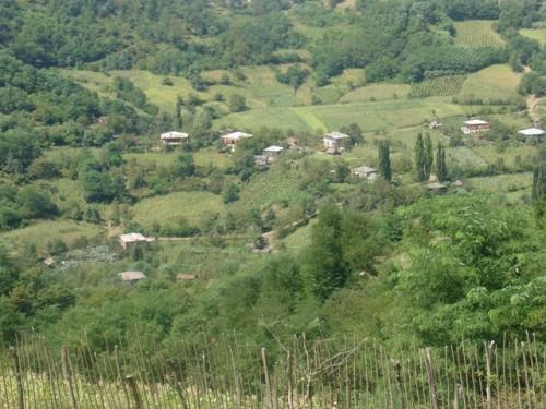 ზესტაფონში, სოფელ ილემის საბავშვო ბაღში რვა ადამიანი მოიწამლა, მათ შორის ხუთი ბავშვი
