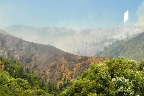 ბორჯომის ხეობაში ტყის აღსადგენად გახსნილ სპეციალურ ანგარიშზე უკვე მილიონ 770 ათასი ლარი ჩაირიცხა